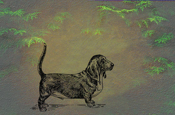 Mixed Media - Basset Hound  by Movie Poster Prints
