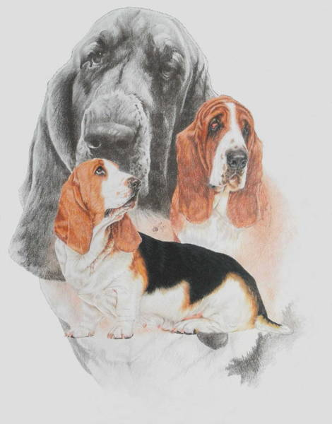 Mixed Media - Basset Hound Revamp by Barbara Keith