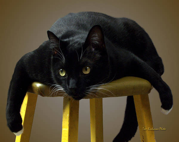 Black Cats Photograph - Batcat by Tom Buchanan