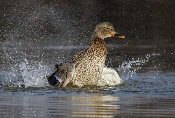 Photograph - Bath Time by Judi Dressler
