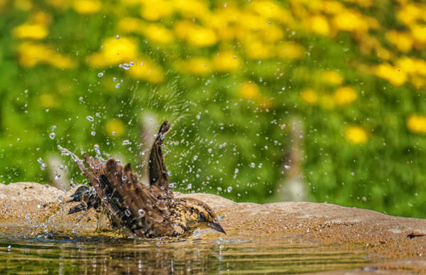 Photograph - Bath Time Lil One by Jorge Perez - BlueBeardImagery
