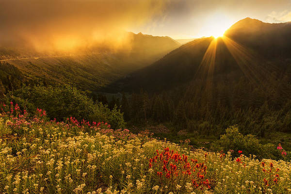 Fireweed Photograph - Bathed In Light by Mark Kiver