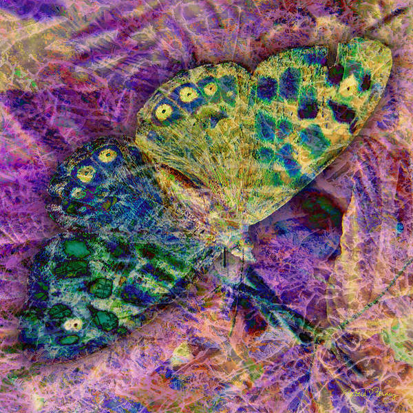 Digital Art - Batik Butterfly by Barbara Berney