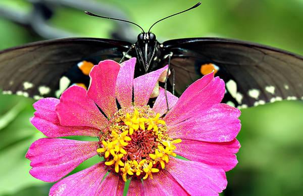 Wall Art - Photograph - Batman Butterfly by Celestial Blue