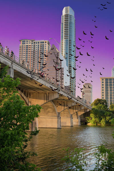 Wall Art - Photograph - Bats Over Austin by Juli Scalzi
