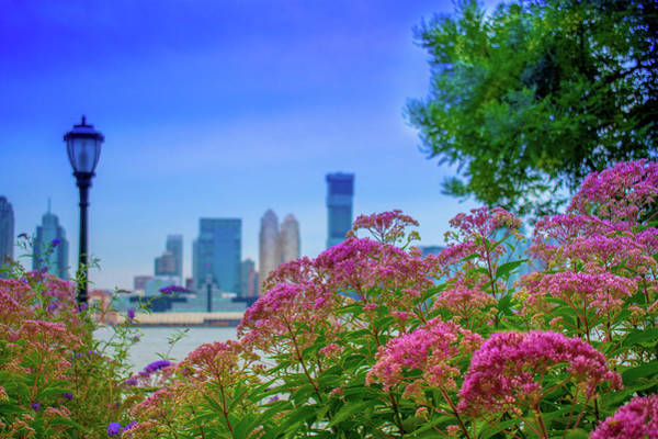 Photograph - Battery Park Blooms by Marvin Bowser