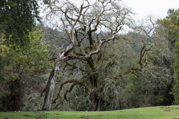 Photograph - Battle Of The Trees by Peter Dyke