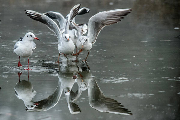 Photograph - Battle Reflection  by Cliff Norton