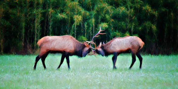 Wall Art - Photograph - Battling Bulls by Lana Trussell