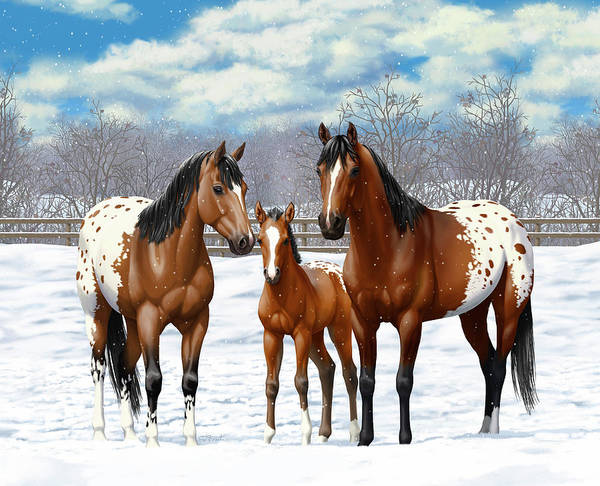 Wall Art - Painting - Bay Appaloosa Horses In Winter Pasture by Crista Forest