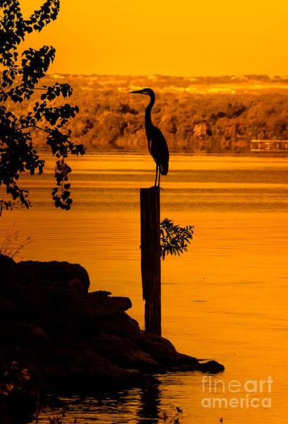 Bird Watcher Photograph - Bay At Sunrise - Heron by Robert Frederick