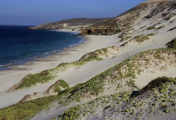 Bay Beach And Sand Dunes Art Print