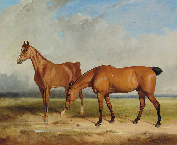 Chestnut Horse Painting - Bay Hunter And Chestnut Mare In A Field by Thomas Woodward