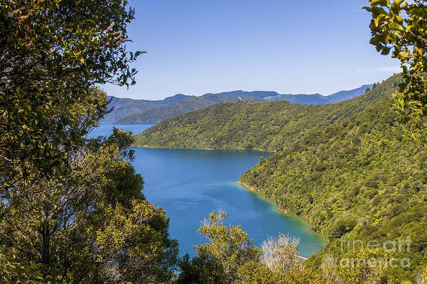 Queen Charlotte Islands Wall Art - Photograph - Bay In New Zealand by Patricia Hofmeester