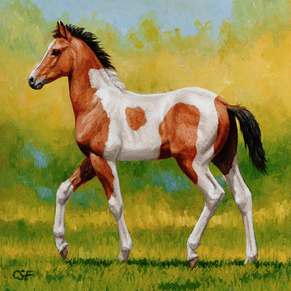 Foal Wall Art - Painting - Bay Pinto Foal by Crista Forest
