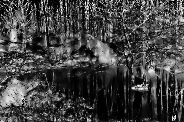 Photograph - Bayou Meto 2 by Gina O'Brien
