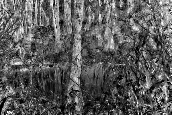 Photograph - Bayou Meto 3 by Gina O'Brien