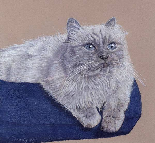 Painting - Bayou - Portrait Of A Himalayan by Patricia Barmatz