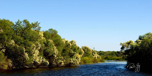 Photograph - Bayou Sauvage Louisiana by Paul Gaj
