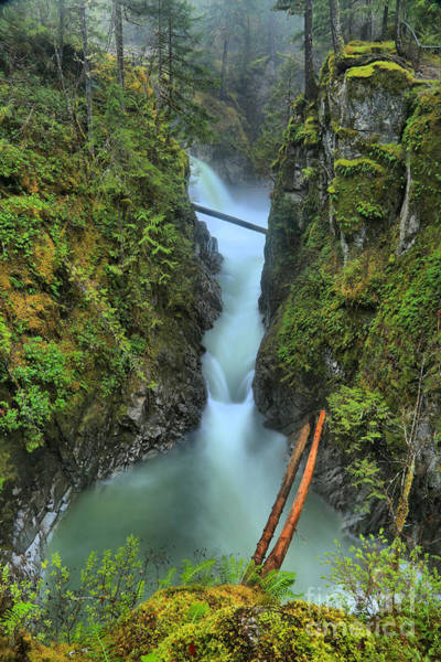Photograph - Bc Rainforest Canyon by Adam Jewell