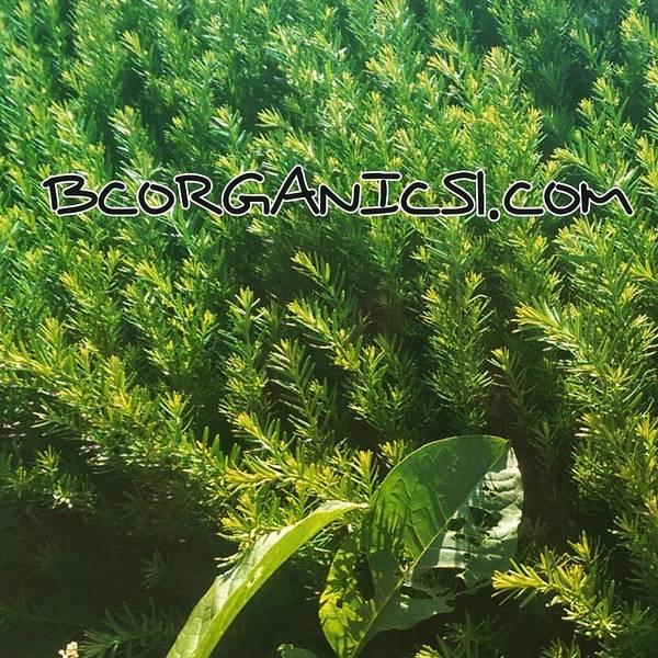 Photograph - Bcorganics1.com by Bc Adamkowski