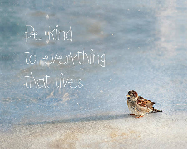 Photograph - Be Kind by Jill Love
