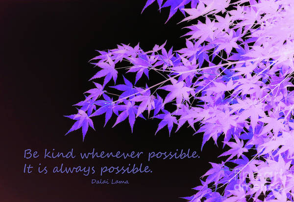 Quotation Photograph - Be Kind by Susan Lafleur