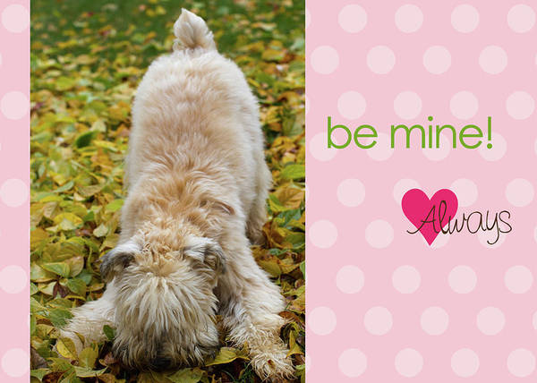Wall Art - Photograph - Be Mine Always by Rebecca Cozart