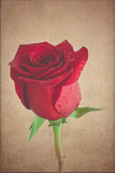 Photograph - Be My Valentine - Matte Finish by Garvin Hunter
