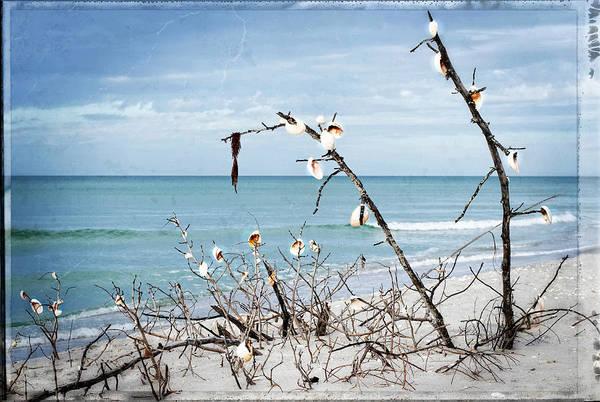 Wall Art - Photograph - Beach Art - Sea Shrine - Sharon Cummings by Sharon Cummings