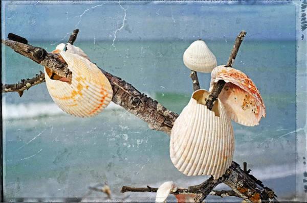 Wall Art - Photograph - Beach Art - Seashell Shrine - Sharon Cummings by Sharon Cummings