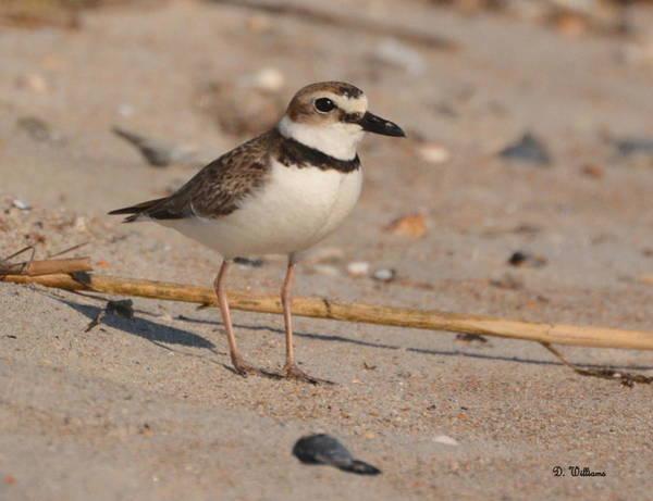 Photograph - Beach Bird by Dan Williams