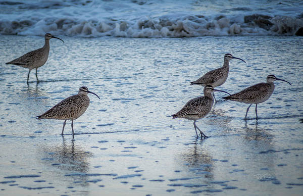 Photograph - Beach Birds by Bill Posner