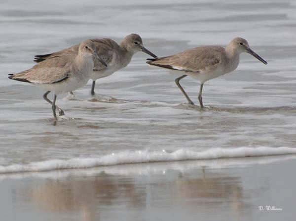 Photograph - Beach Birds by Dan Williams