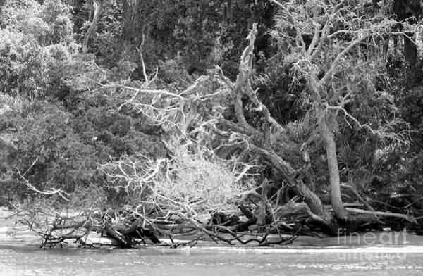 Photograph - Beach Bones by D Hackett