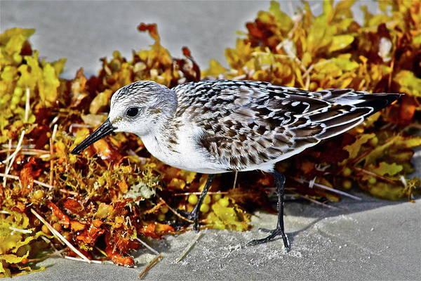 Photograph - Beach Buddy by Diana Hatcher