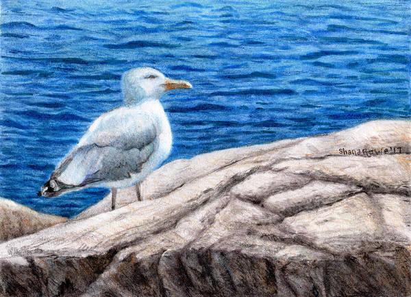 Avian Drawing - Beach Bum by Shana Rowe Jackson