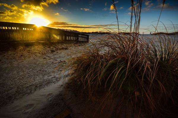 Photograph - Beach Bush by Michael Thomas