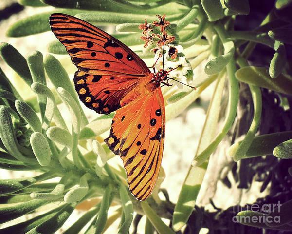 Wall Art - Photograph - Beach Butterfly by Chris Andruskiewicz