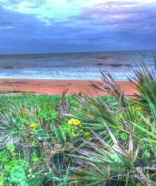 Flagler Beach Photograph - Beach Cactus by Debbi Granruth