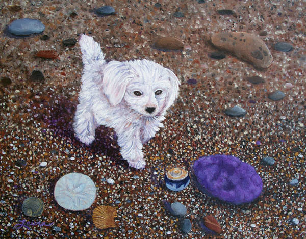 Maltipoo Wall Art - Painting - Beach Discoveries by Laura Iverson
