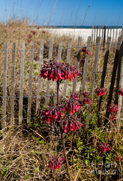 Photograph - Beach Fence And Red Flowers by Michelle Constantine