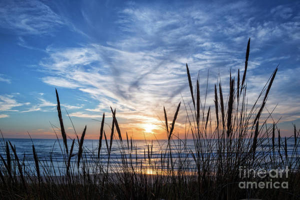Wall Art - Photograph - Beach Grass by Delphimages Photo Creations
