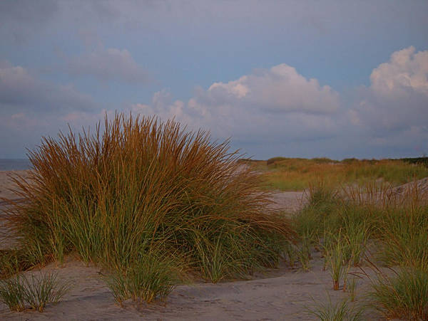 Photograph - Beach Grass I I by  Newwwman
