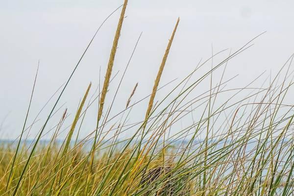 Photograph - Beach Grass by Kendall McKernon