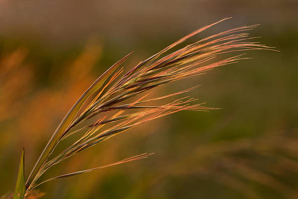 Photograph - Beach Grass by Mary Jo Allen
