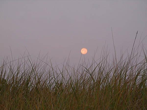 Photograph - Beach Grass by  Newwwman