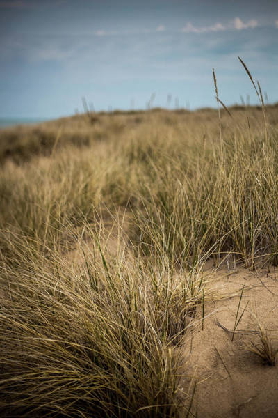 Photograph - Beach Grass by Sue Conwell