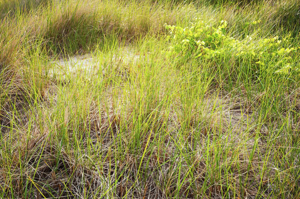 Wall Art - Photograph - Beach Grasses Number 8 by Steve Gadomski