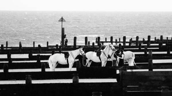 Grey Horse Photograph - Beach Horse by Martin Newman